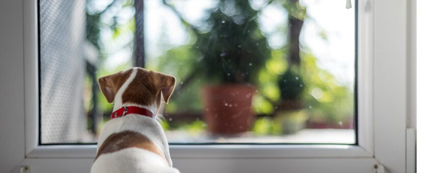 Making Your Custom Home Pet Friendly